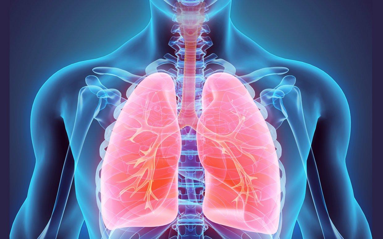 menjaga kesehatan paru-paru dan jantung