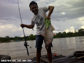 Master Umpan Ikan Patin Babon