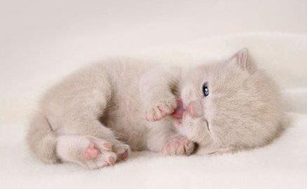 Gatito pequeño manita en la boca