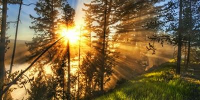 صورة أشجار عكس الضوء