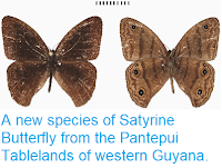 https://sciencythoughts.blogspot.com/2014/11/a-new-species-of-satyrine-butterfly.html