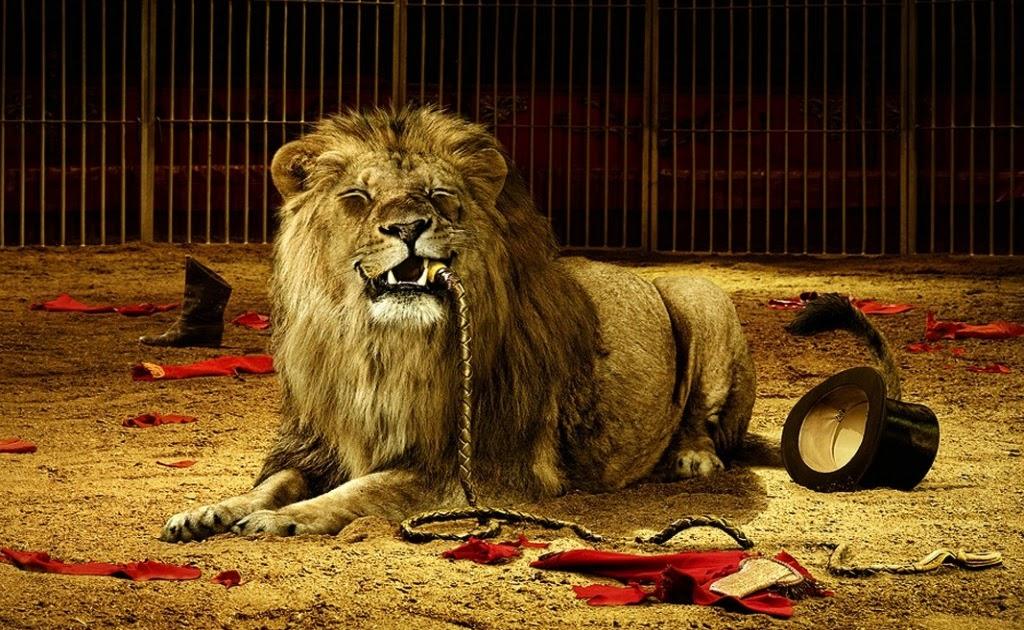 36 Gambar Singa - Foto Singa Paling Keren | Net Since