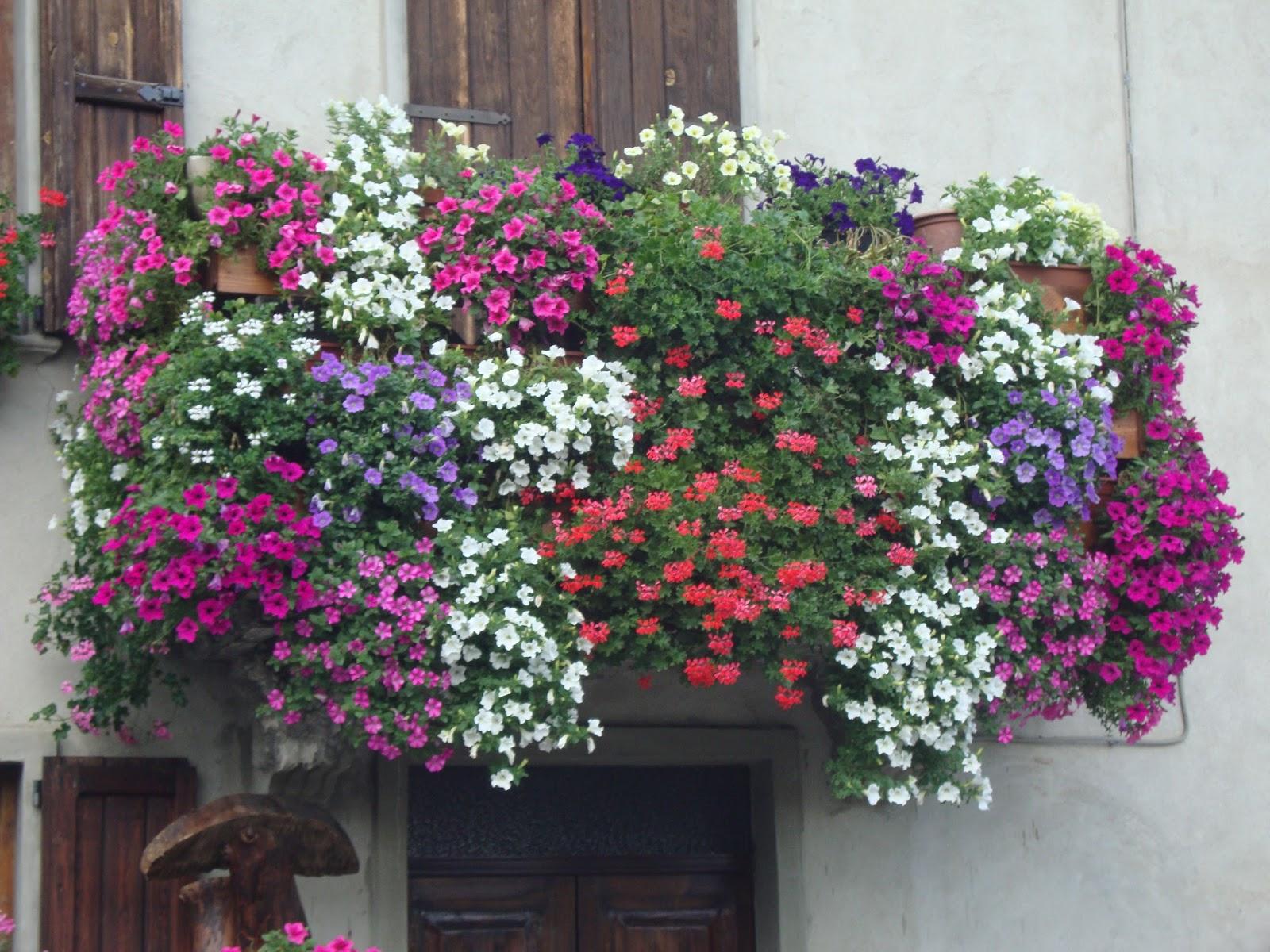 Un piccolo giardino in citt balconi fioriti for Case ricoperte di edera