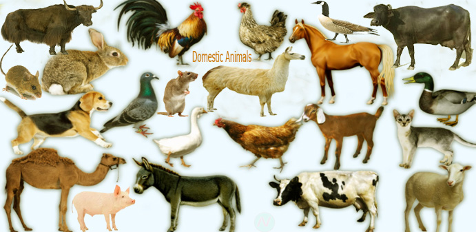 100+ Farm Animals Names List – yasminroohi