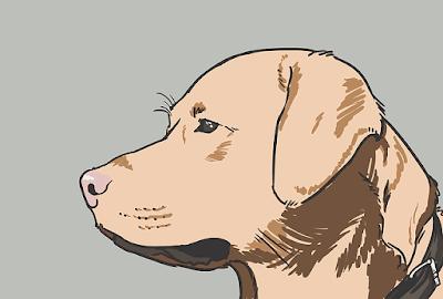 Top 10 Dog Breeds Around The World : By WildSecrets