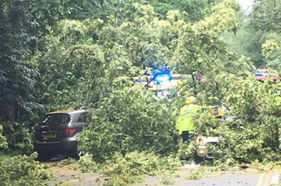Six motorists trapped after huge tree crashes on to busy road