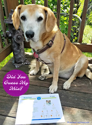 senior mixed breed dog wisdom panel results