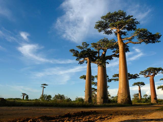 Où trouver un billet / hôtel pas cher pur des vacances à Madagascar ?