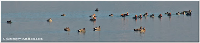 Water Birds, Nangal, Dam, Lake,