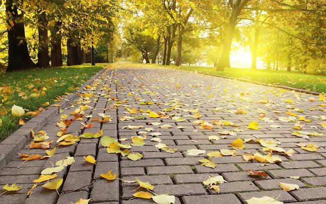 Gele herfstbladeren op een stenen klinkerweg