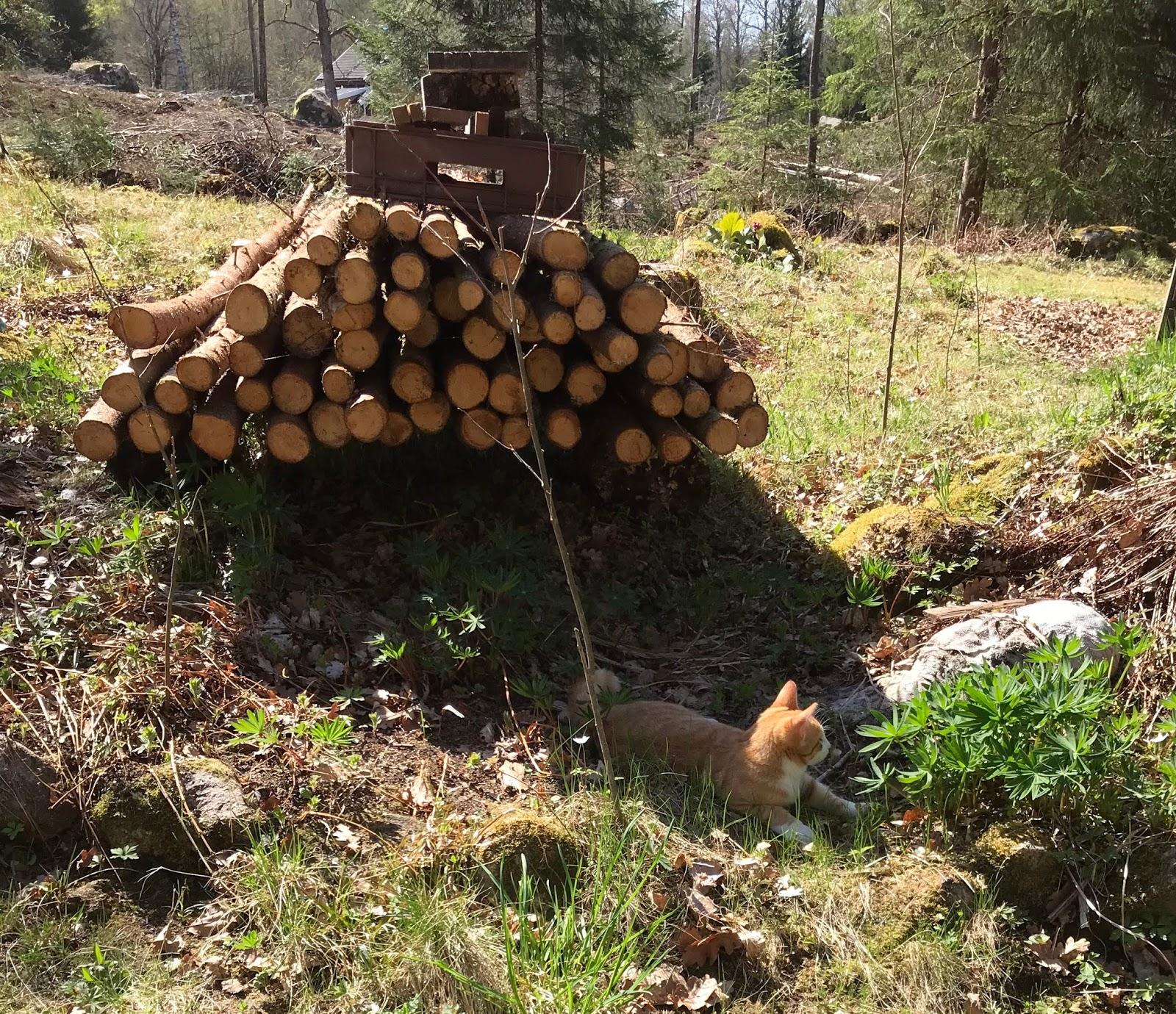 Sol och varme dags att fixa tradgarden