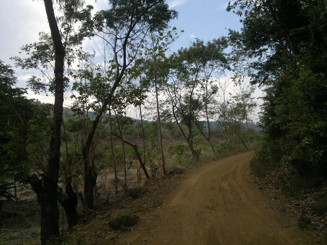 Ipil Ipil Trees along the road