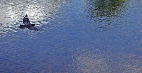 Pássaro voando sobre o rio. #PraCegoVer