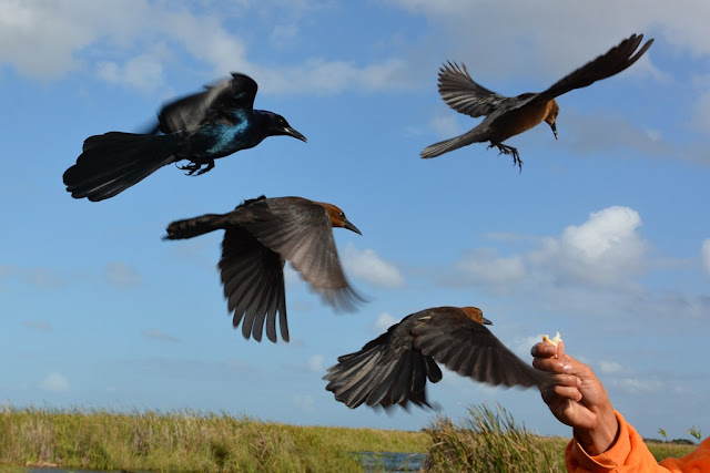 Everglades Rivers birds