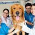 Bác sĩ thú y quận 9 uy tín chữa bệnh chó mèo tận nhà
