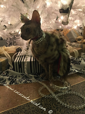 Coco Cornish Rex Couture Faux Fur NYC