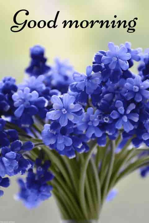 morning wallpaper with blue flower bouquet