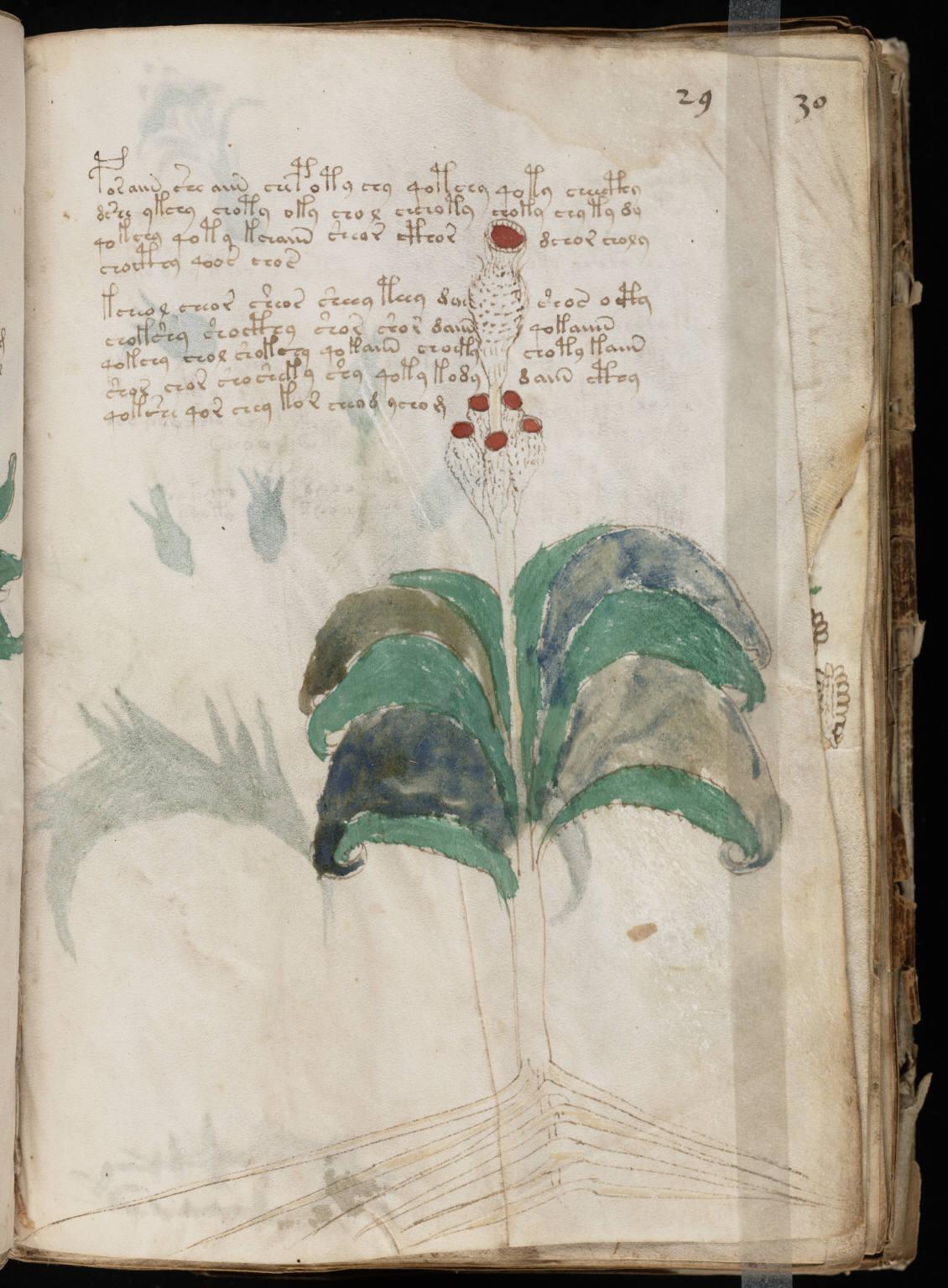 manuscrito055