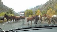 Kyrgyzstan, horses, © L. Gigout, 2012