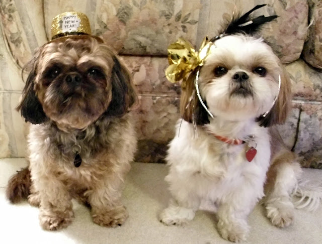 Shih Tzu Emma and Emmy: Happy Chinese New Year from puppies  |Shitzu Puppies New Years Eve
