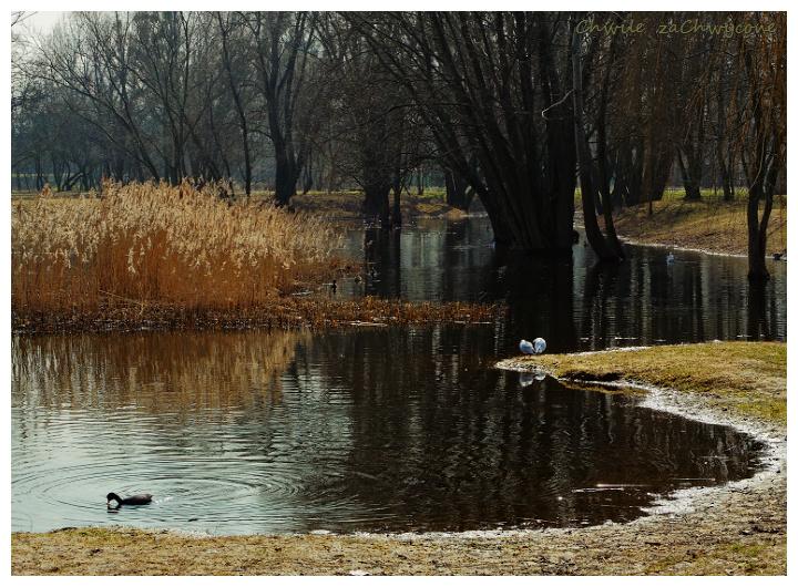 ptaki nad wodą, ptaki w parku, sadzawka w parku wiosna