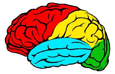 Khasiat Daun Kelor untuk Kesehatan Otak