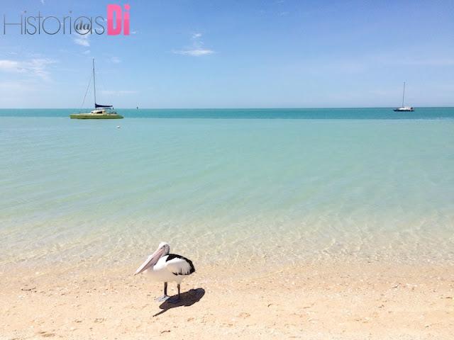 Pelicano - Monkey Mia