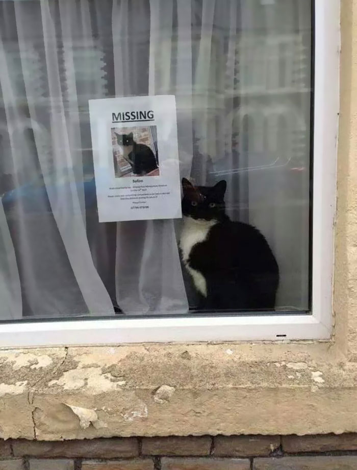Missing Cat Found Near His Own 'Missing Cat' Poster
