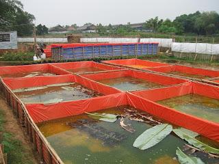 kolam terpal dalam tanah