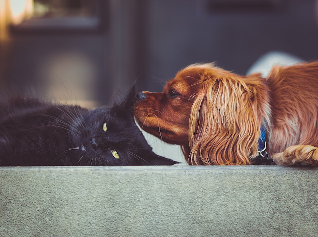 cat and dog, Lessons in love from the animal kingdom, imogen molly blog, www.imogenmolly.co.uk