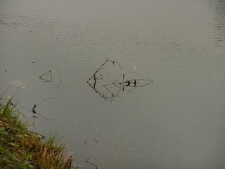 canal de Lalinde, oiseau, malooka
