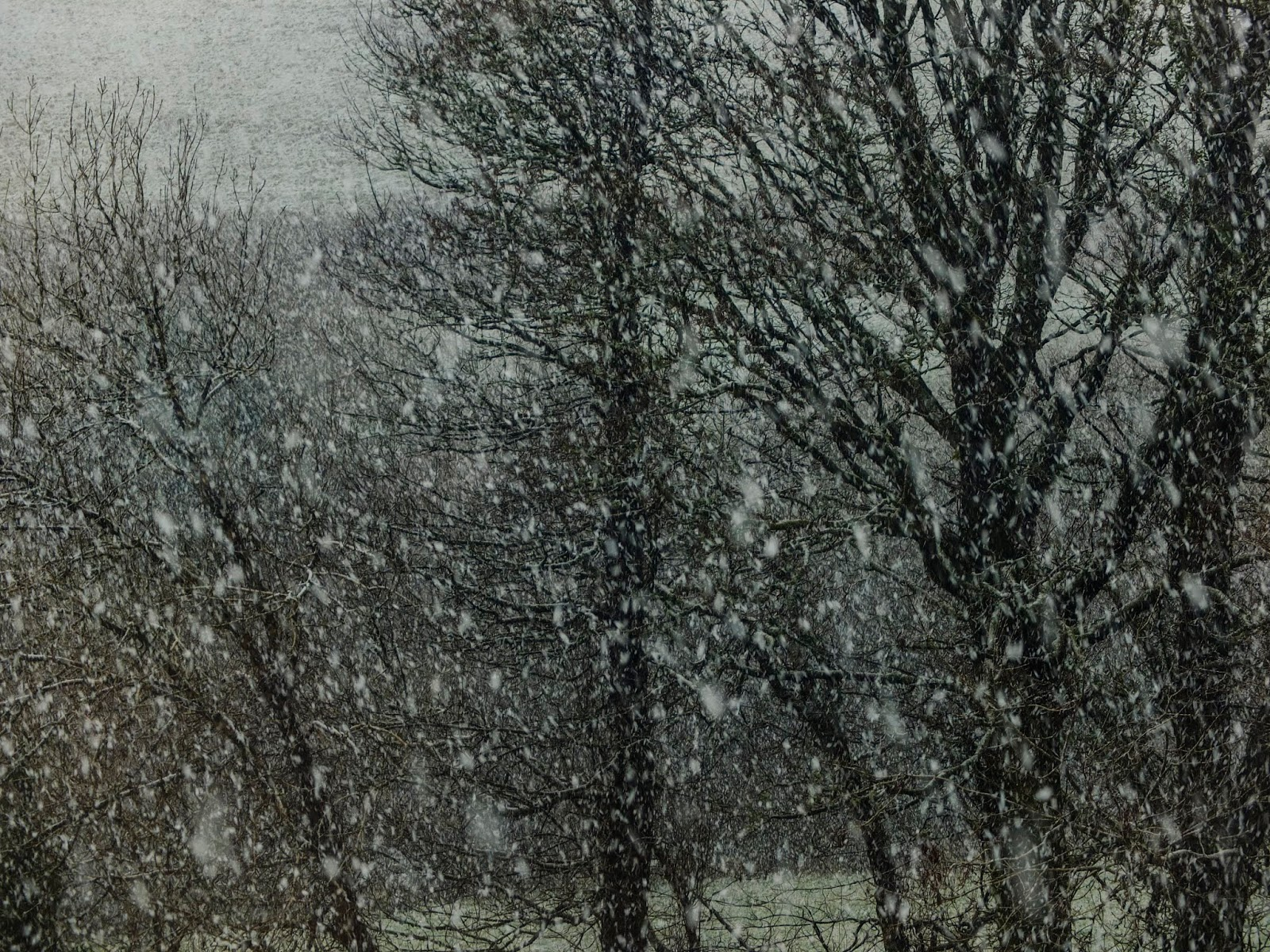 Heavy snow falling with bare tree branches in the background.