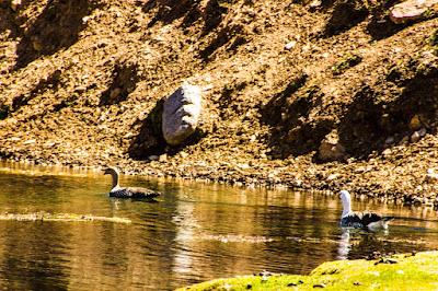 Embalse Yeso - Termas del Plomo - Laguna de los Patos