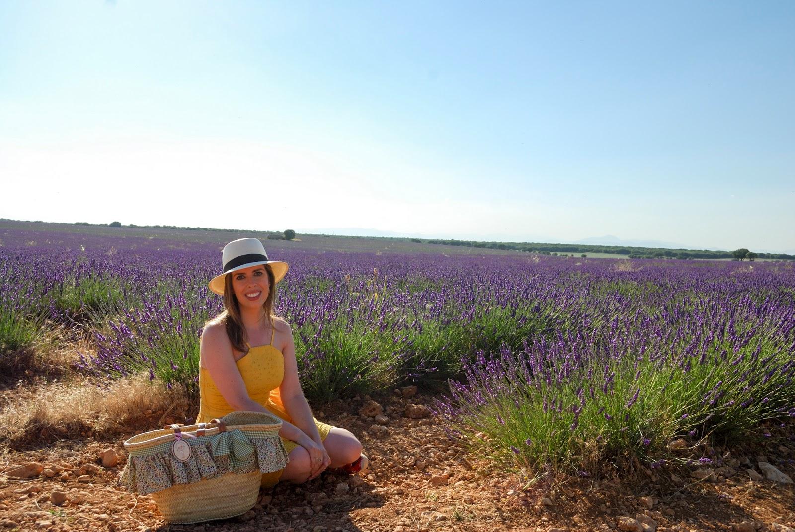 festival campos lavanda brihuega guadalajara lavender fields spain