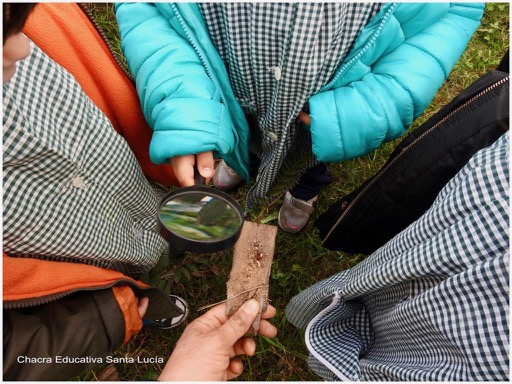 Niños utilizando una lupa para observar insectos - Chacra Educativa Santa Lucía