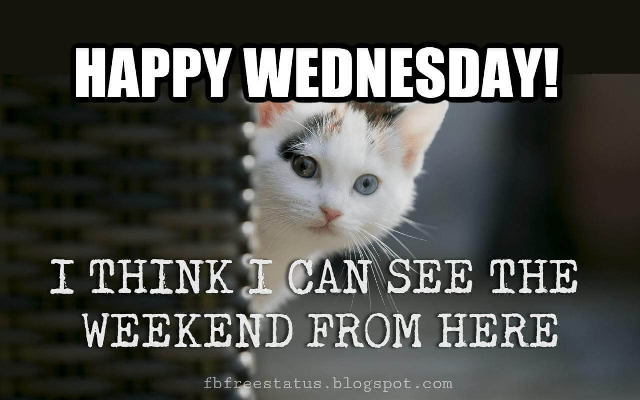 Happy Wednesday Funny Memes