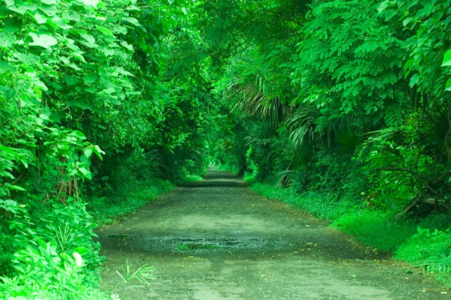 Hutan evergreen di Baluran.