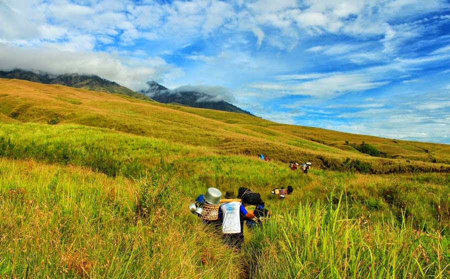 Savanna grass Tall Sembalun Lawang altitude 1500 m National Park of Mount Rinjani