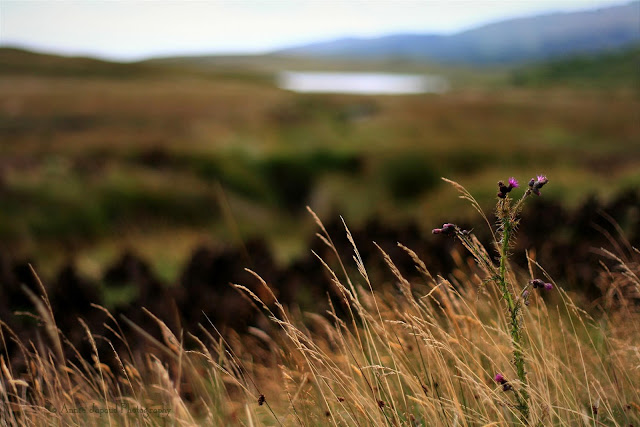 turf and grass and flowers in Connemara