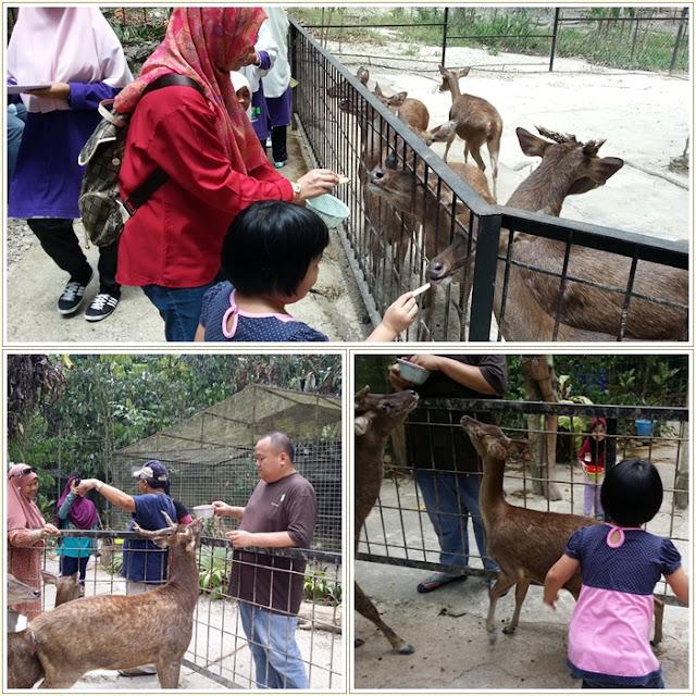 Tempat menarik Di Pahang|Taman Rusa | Deerland Lanchang Pahang