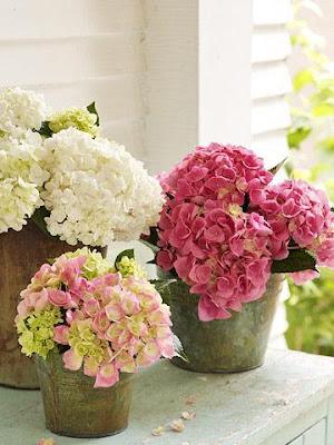 Cám hoa đẹp