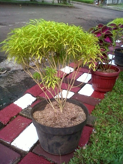 www.warung-tanaman.com