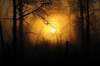 por do sol visto da floresta