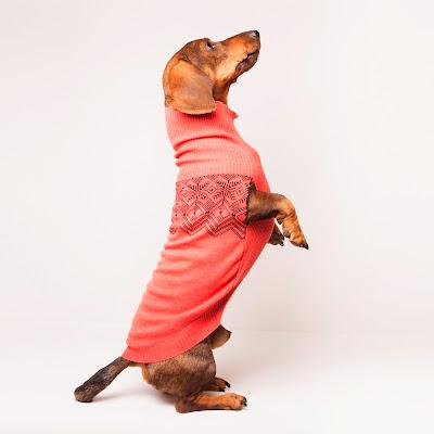 Jersey para perro modelo Oxford