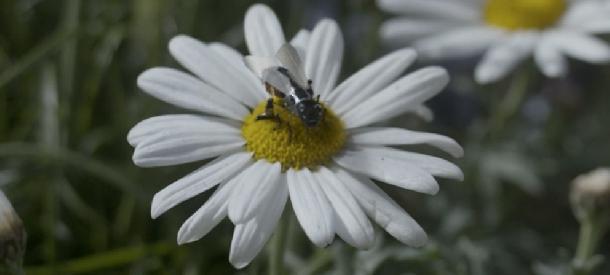 النحل الالكتروني اختراعات جديد العسل تلقيح تكنولوجيا نورتك nooortec nooor tec نحل