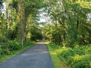 trail running 06.30.18
