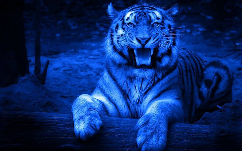 Fond Ecran Tigre 3d Fonds D Ecran Hd