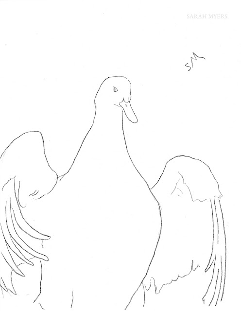 minimal, line, drawing, sketch, art, arte, dibujo, duck, pato, animal, bird, sarah, myers, simple, contemporary, modern, flapping, wings, line-drawing, feathers, lines, black, white, dessin