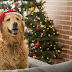 Christmas Health Tips for Dogs