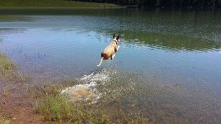 Dog flies over lake